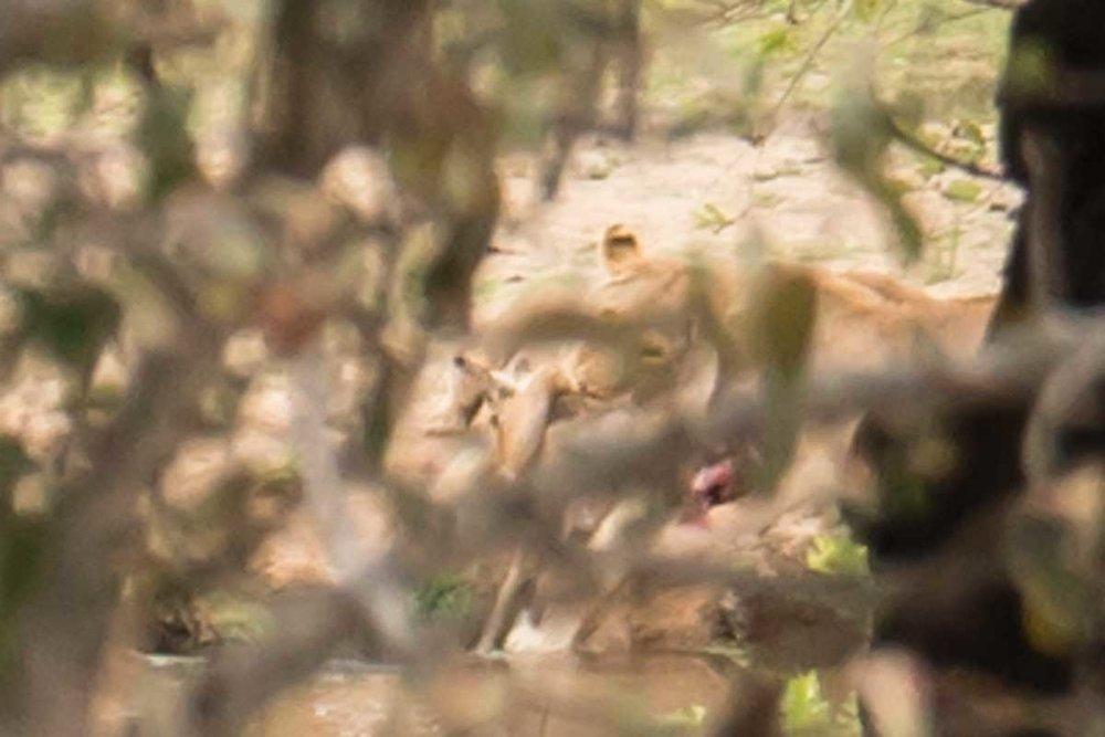 2016-10-02 Kruger So. Afeica-248-2.jpg