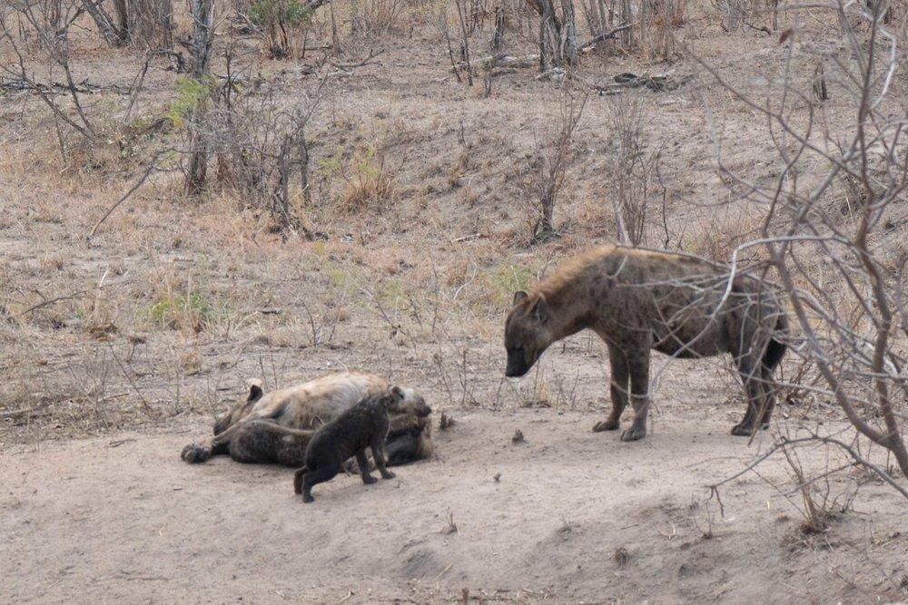 2016-10-02 Kruger So. Africa-298.jpg