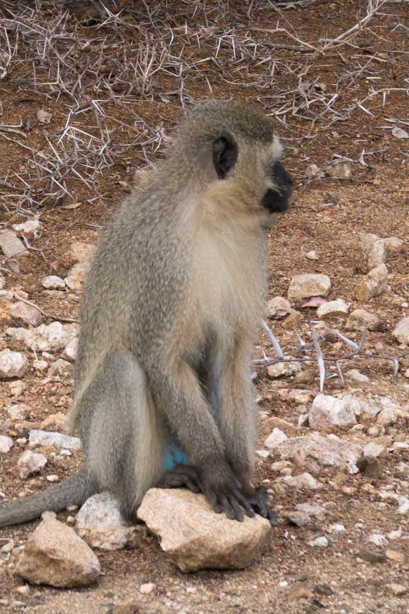 2016-10-02 Kruger So. Africa-359.jpg