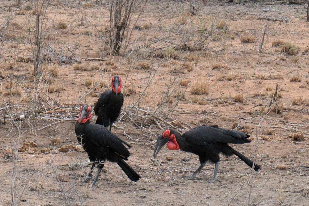 2016-10-02 Kruger So. Africa-359-2.jpg