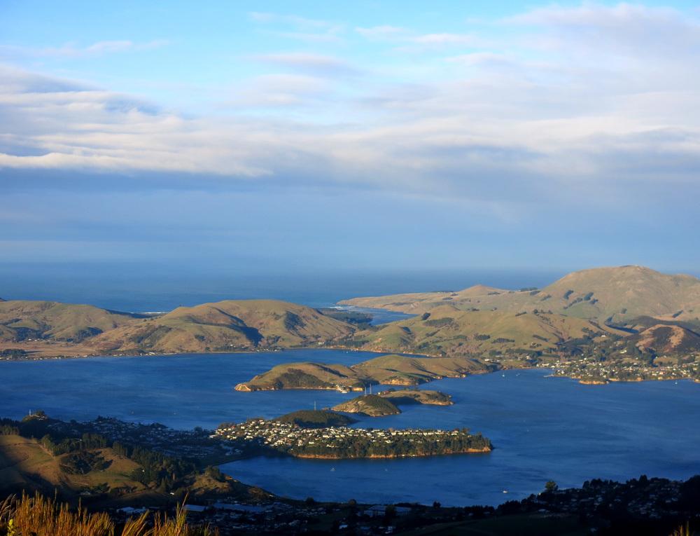 Otago P.jpg