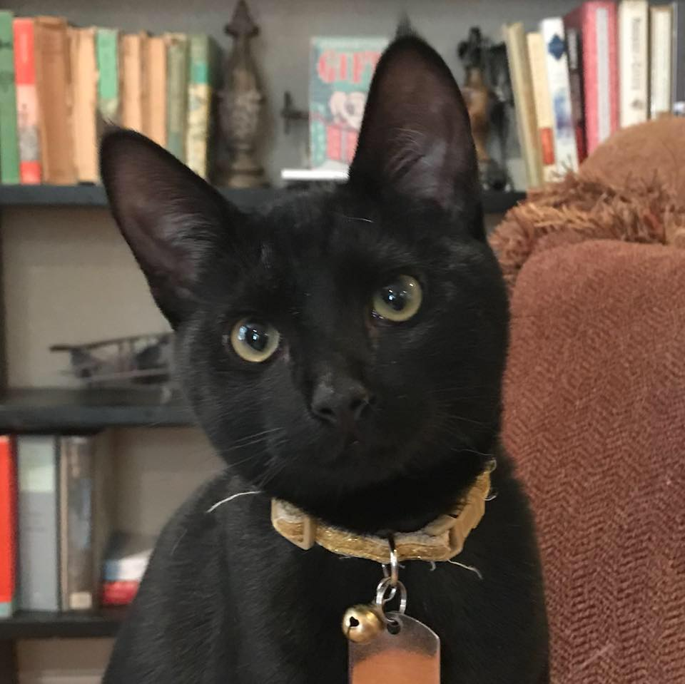 Elijah (Bailey) Kitten