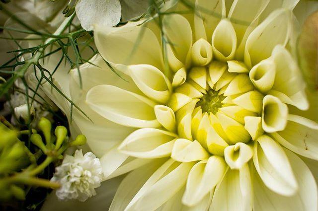 Det finns alltid fina blommor överallt på ett bröllop. Varje detalj är planerad och måste vara plåtad!