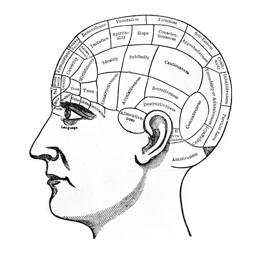 brain size Bisexual