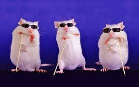 Hope for these fellas! (I debated including a complicated figure from the paper and decided that blind mice are better).