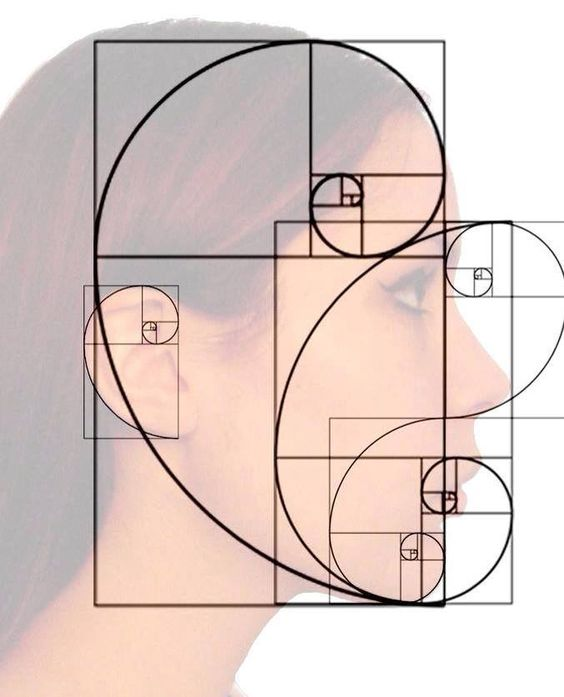 THE GOLDEN MEAN PROPORTIONS EXIST ACROSS OUR ENTIRE BEING