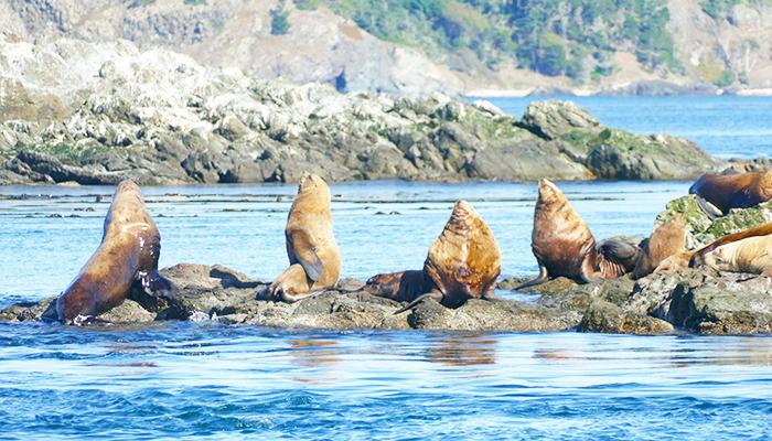 TSJ Blog 3 best whale watch tours (sea lions).jpg