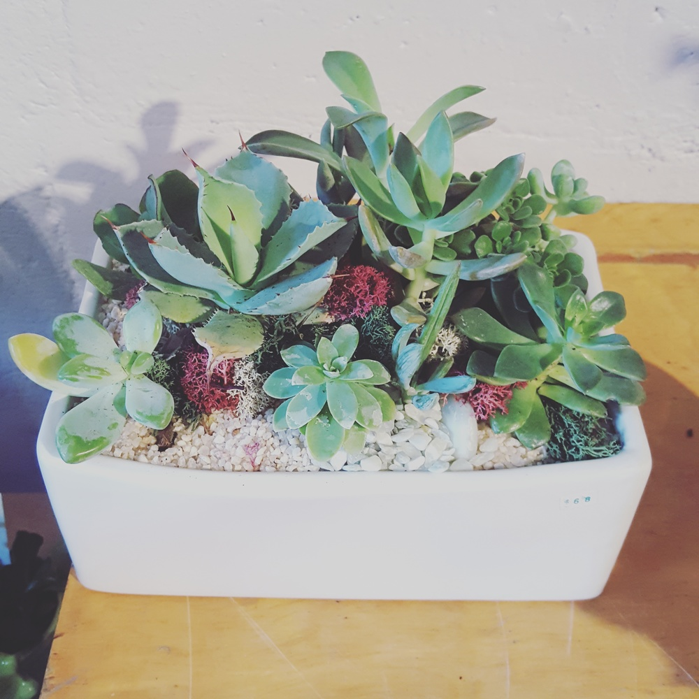 My new succulent plant! (click photo to head over to Plant's website)