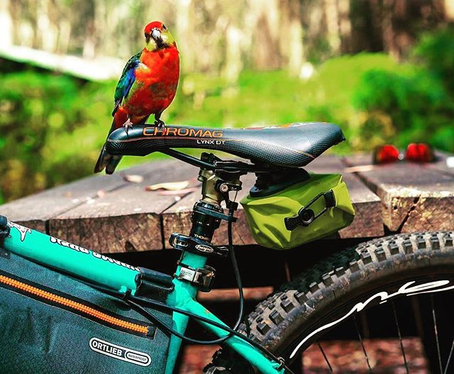 Your bike can take you to amazing places, it keeps you healthy and your even liked by birds 😍😍😍 #papagei #austrailia #perth @ryandownesphotos #thanksbuddy #ginrims #woodyenduro #ginaroundtheworld #ginexperience #gingin #gincarbonrims #biketravel #bikepacking #bike #mtb #mtblife #soenduro #fullenduro #enduromtb #hardtail #skills