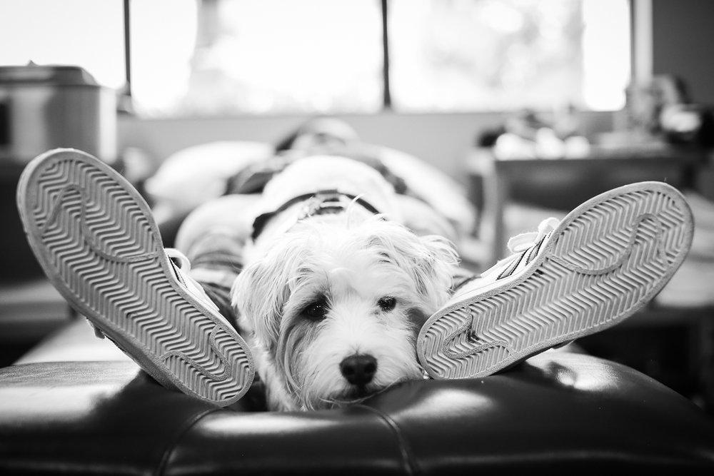 Pokey  - Therapy Dog