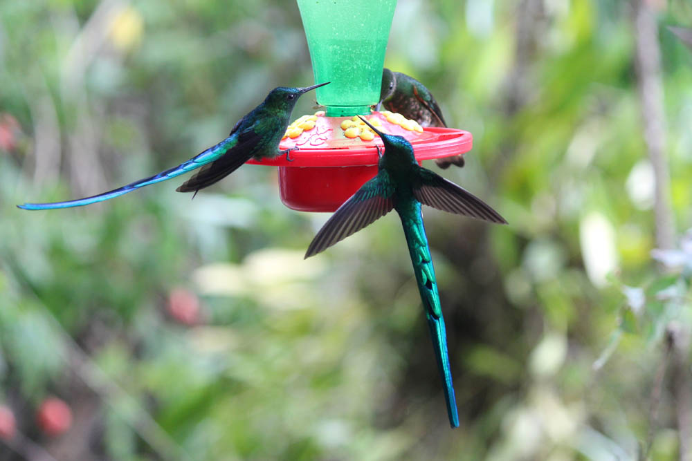 day-hike-to-valle-de-cocora-colombia-salento-hummingbird.jpg
