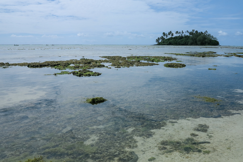 A blanket of algae in the lagoon