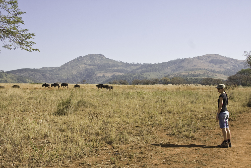 Me with a herd of wildebeest in Swaziland.