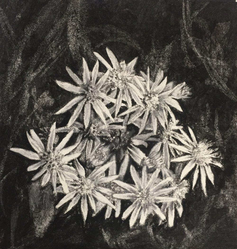"""""""Dandelions"""""""