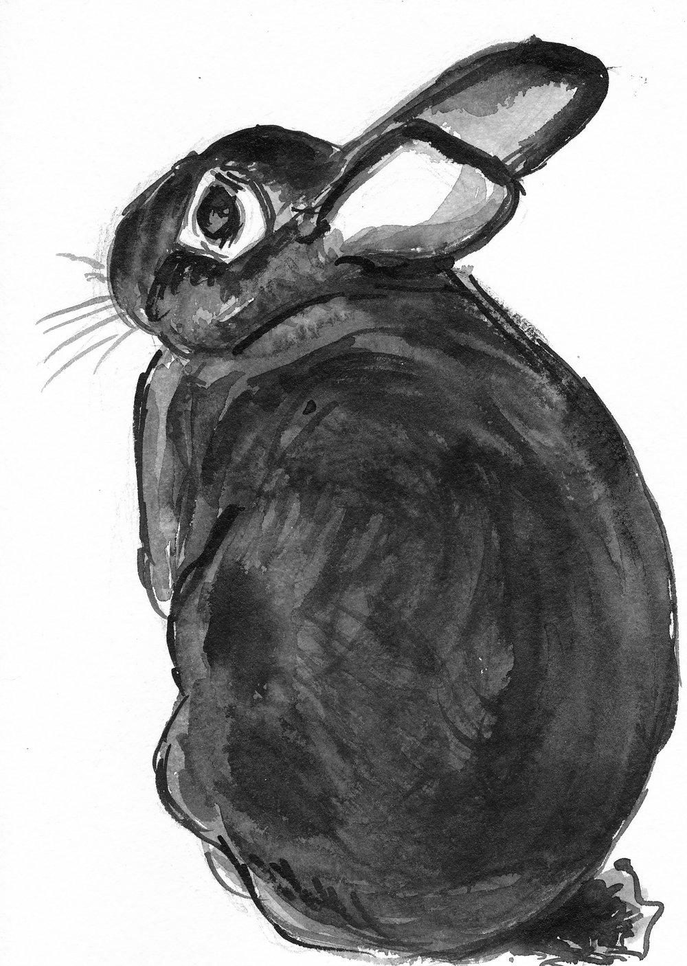 bw-bunny-sitting2.jpg