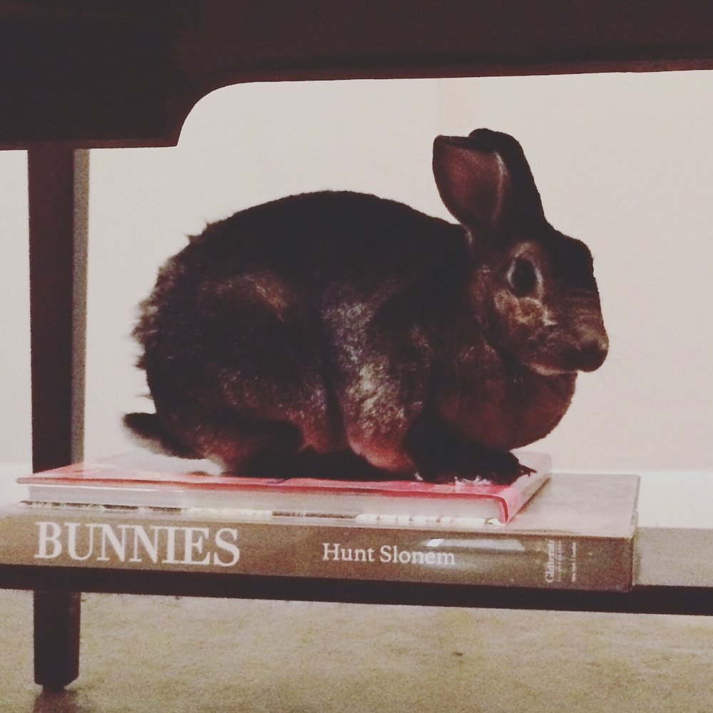 "Yesterday morning I found Glenn perched on top of her ""Bunnies"" book by the amazing artist Hunt Slonem. Smart rabbit."