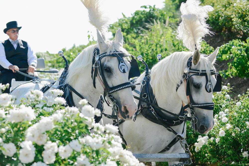 Serendipity-Gardens-Wedding-0066.JPG