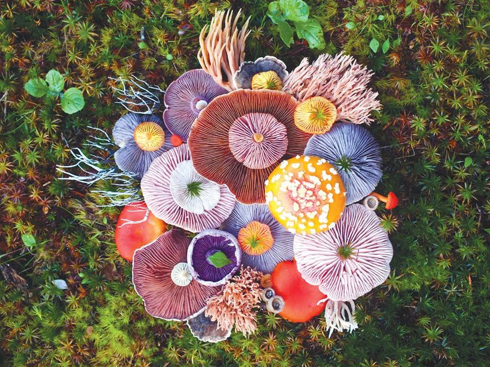 Majestic Mushroom Art Show_Chicago 3-2.jpg