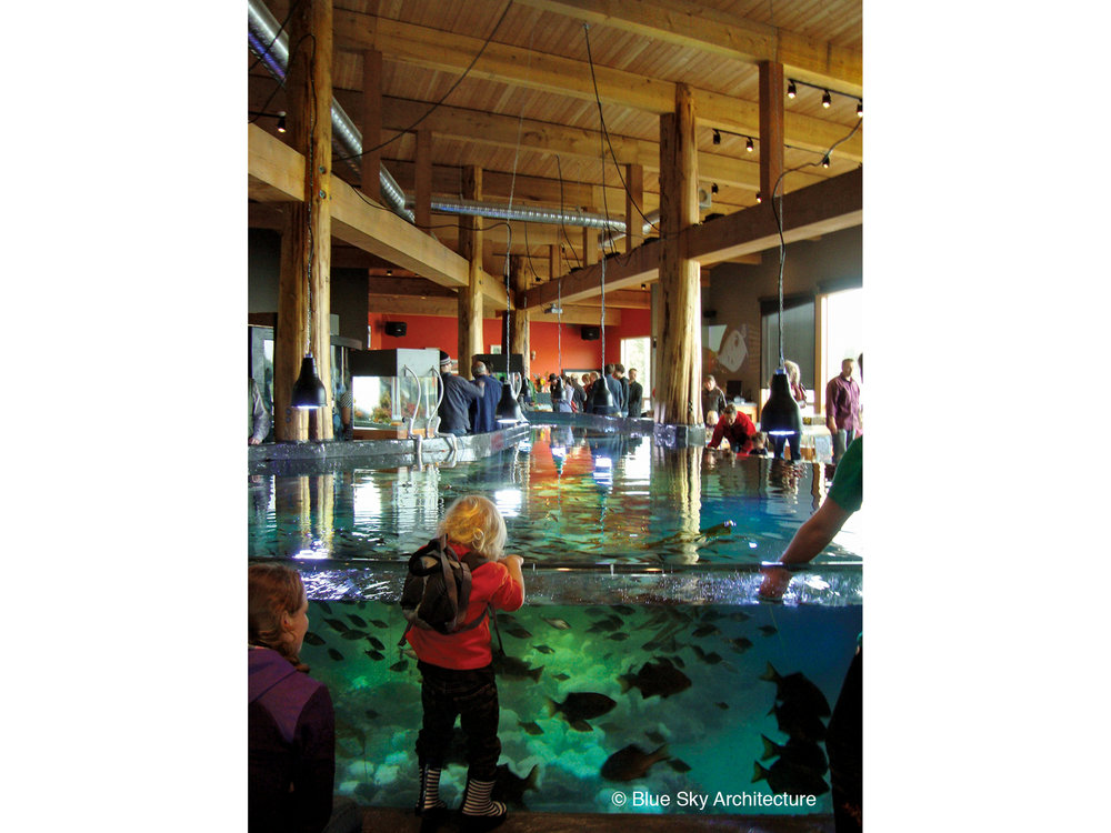 Close up view of the tidal pool at the Ucluelet Aquarium