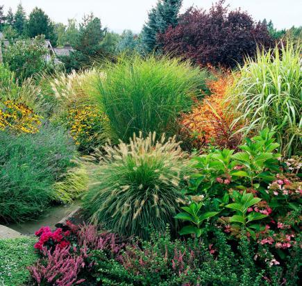 Ornamental grass care eddybrook tree farm and landscaping ornamental grass care workwithnaturefo