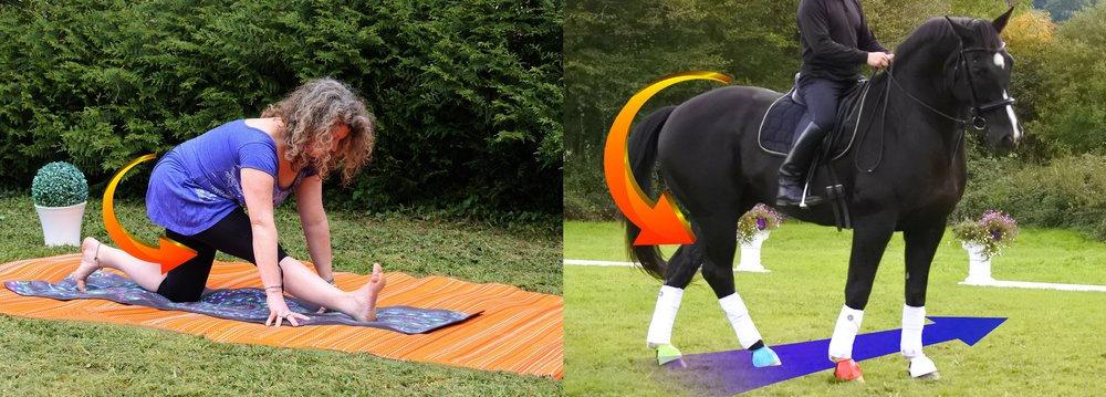 Suppleness, mobility and freedom are the most important of all