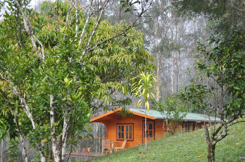 mount-warning-bed-breakfast-retreat-accommodation-murwillumbah-uki-wollumbin-alpine-cabin