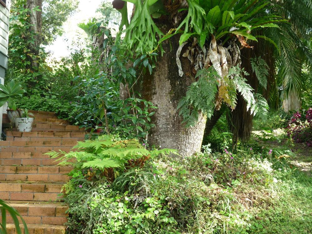 Steps trees Homestead.JPG