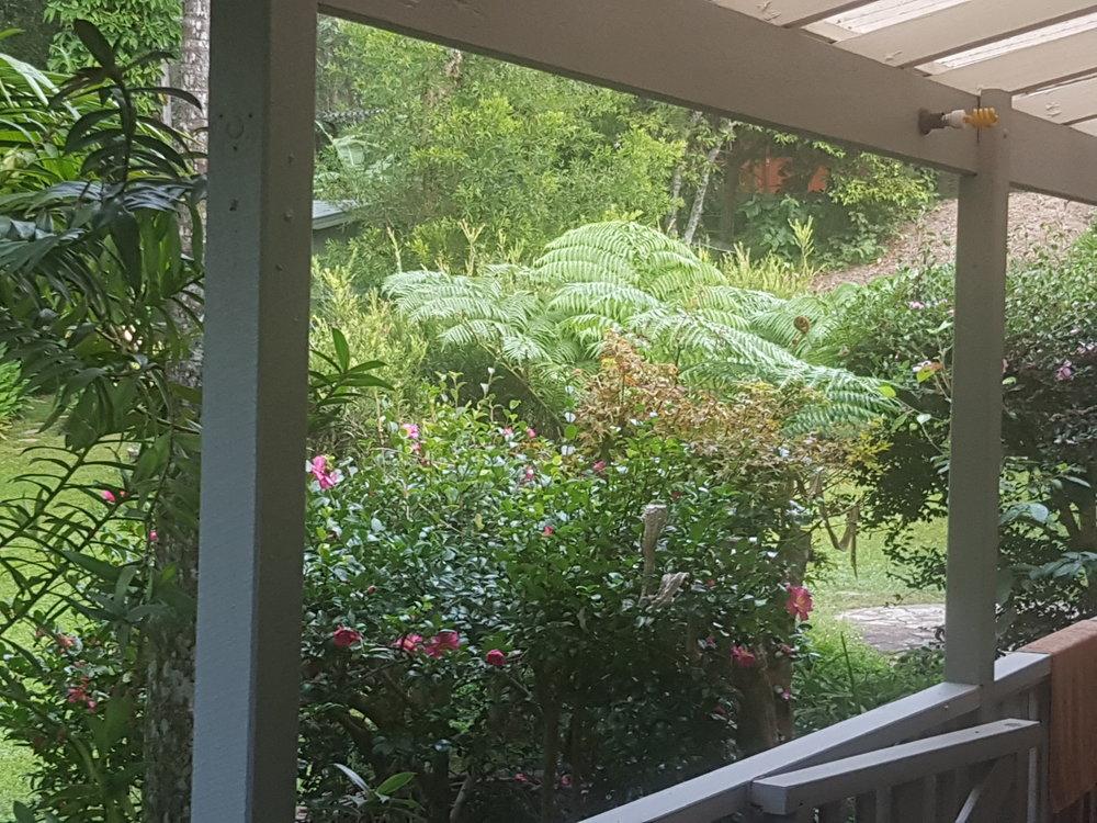 View garden from rear verandah.jpg