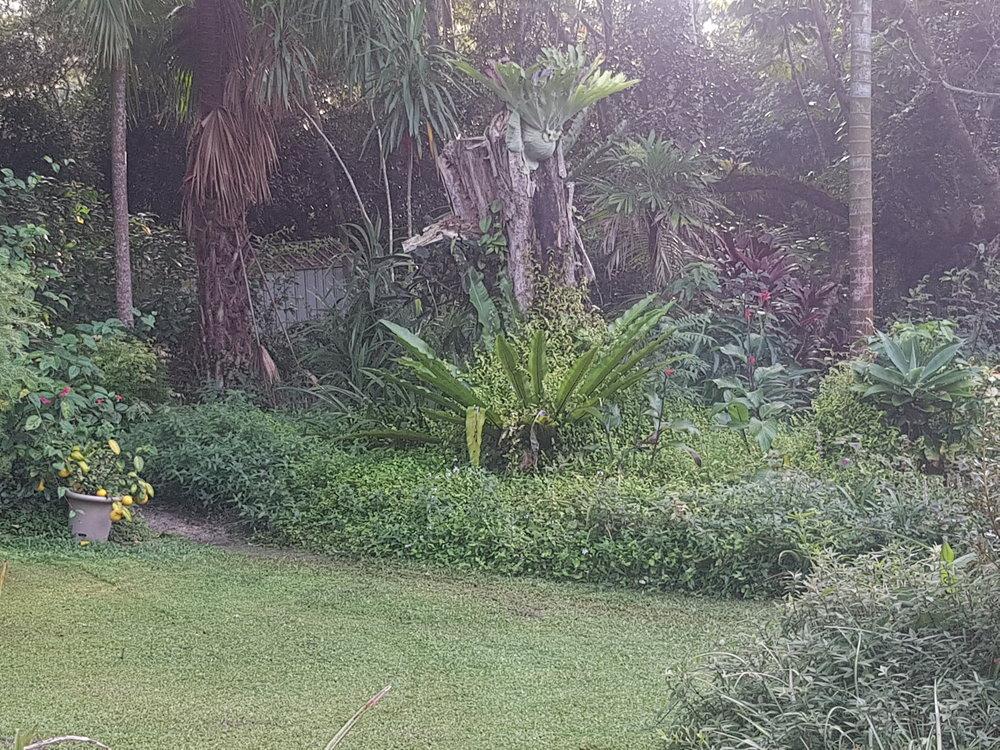 View Garden towards sheds from Pergola .jpg