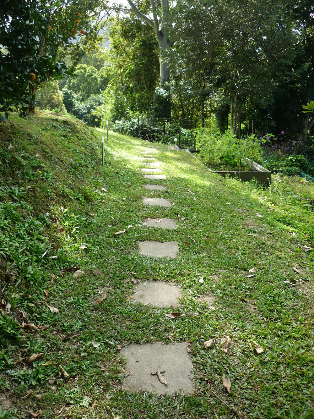 Path from Alpine Cabin.JPG