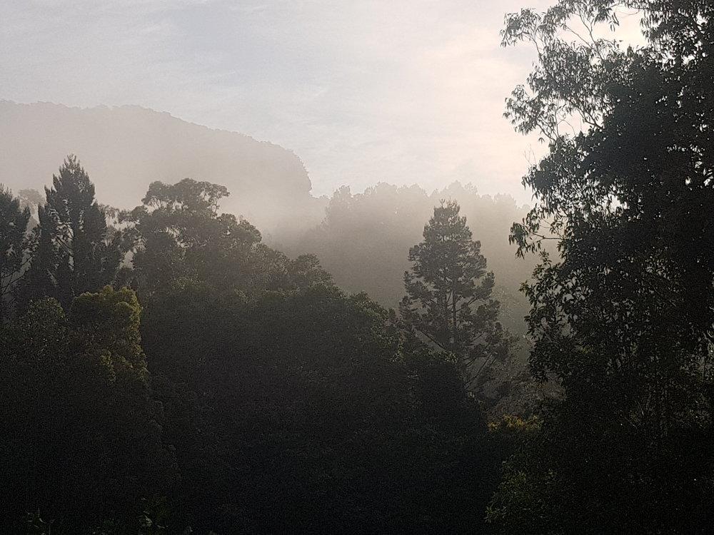 Morning Mist:Fog.jpg