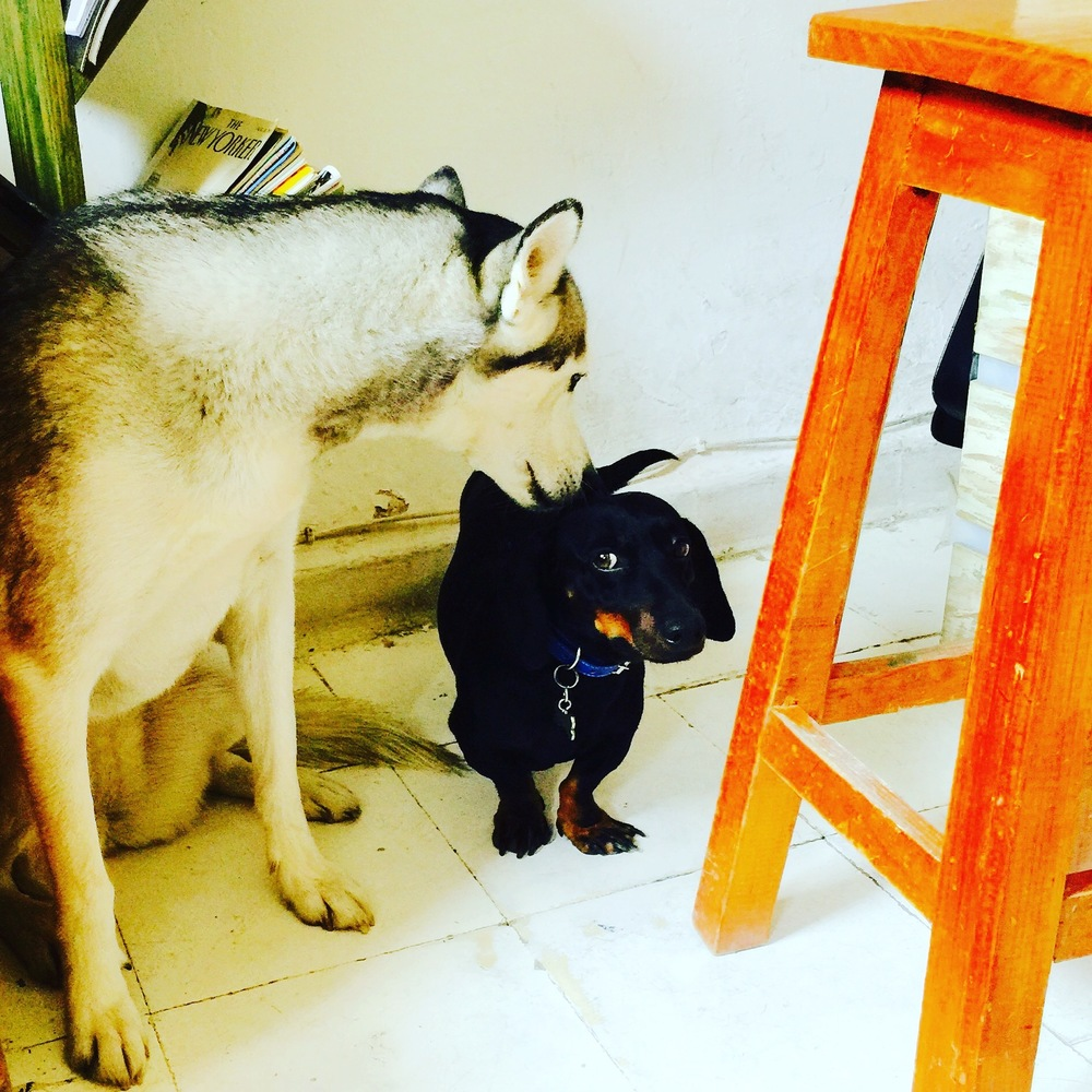 This is Kiba's new friend Huck. Many spots in Mexico allow dogs, we take her mostly everywhere.
