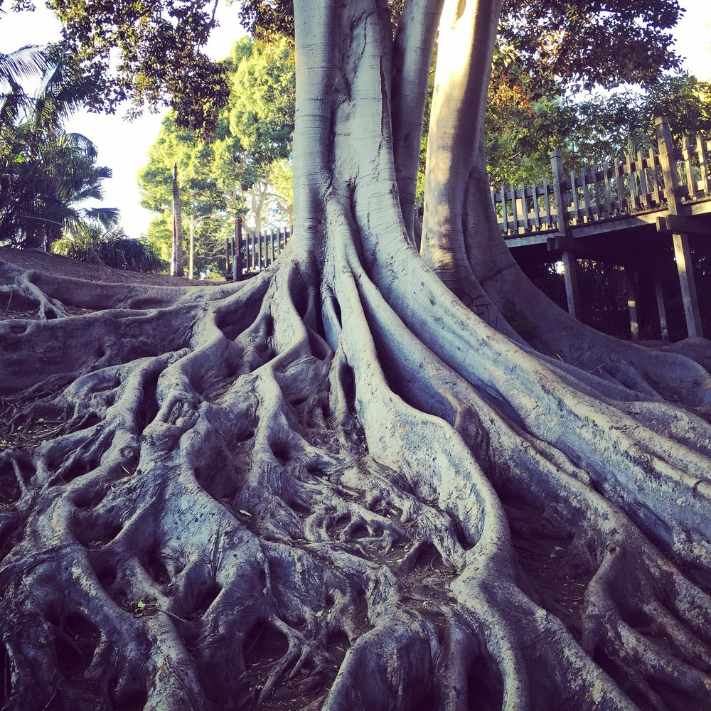 When looking at the roots of a tree it is a simple resonance to how deeply we require eachother for survival.