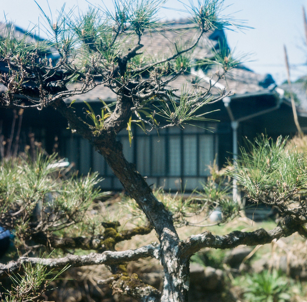2017_04_02 Japan Kitakyushu Autocord Kodak 400 -15.jpg