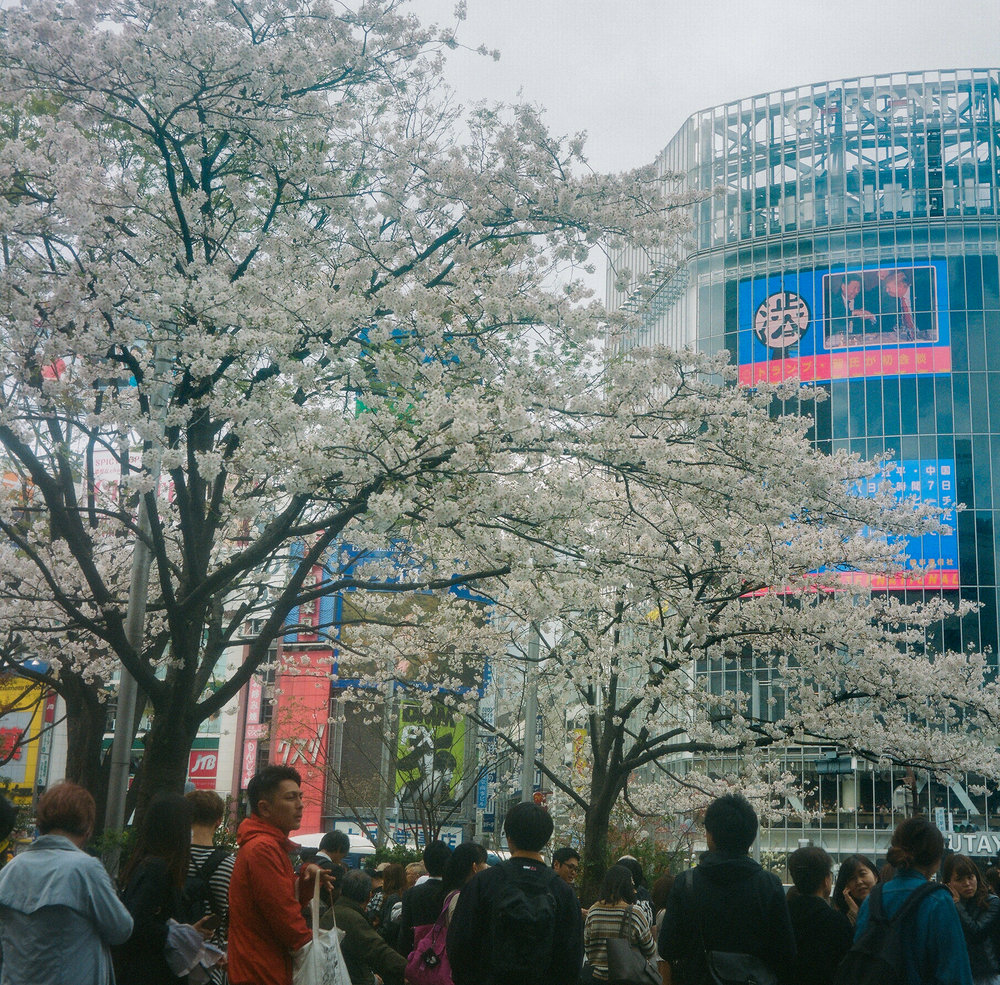2017_04_06 Japan Tokyo Autocord Kodak 400-2.jpg