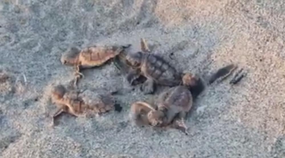 Video from John D. MacArthur Beach State Park