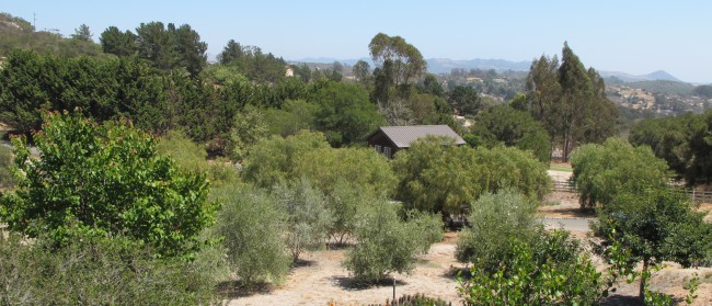 The Art Barn is nestled in this quiet, beautiful area of Arroyo Grande, CA (San Luis Obispo County)