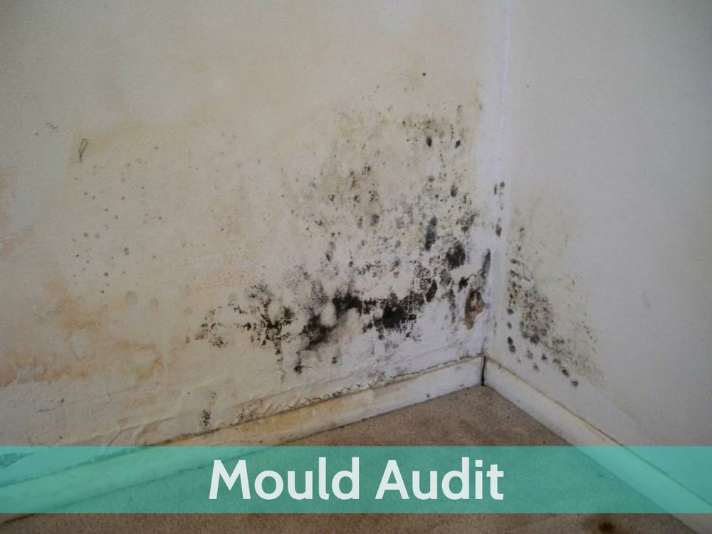 Website-Services-Mould-Audit.jpg