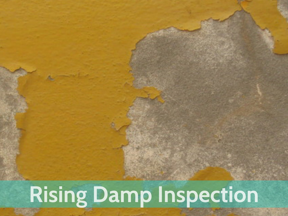 Website-Services-Rising-Damp-Inspection.jpg