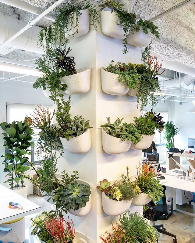 Living wall courtesy of @acme5lifestyle at @cavuventures #livingwall #greenscaping #plants #interiordesign #wallygro #acme5