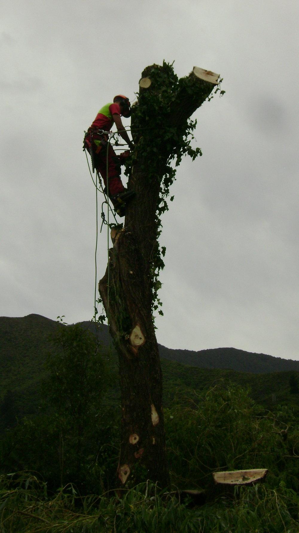 willow picton (28).JPG