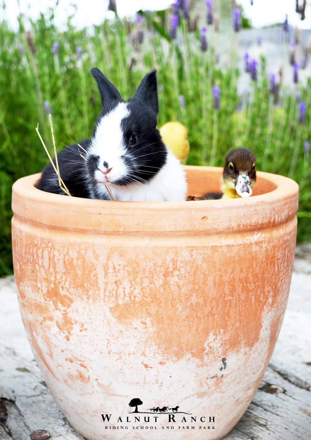 Potted Rabbit