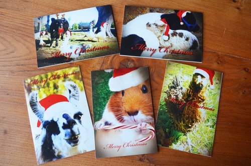 Christmas card set (5 cards): $10