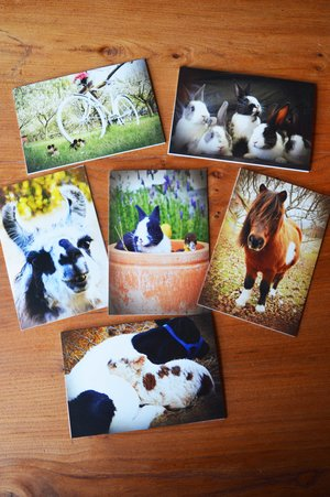 Animal Park card set (6 cards): $10