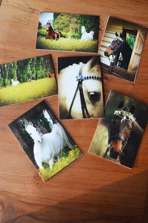 Horse card set (6 cards): $10