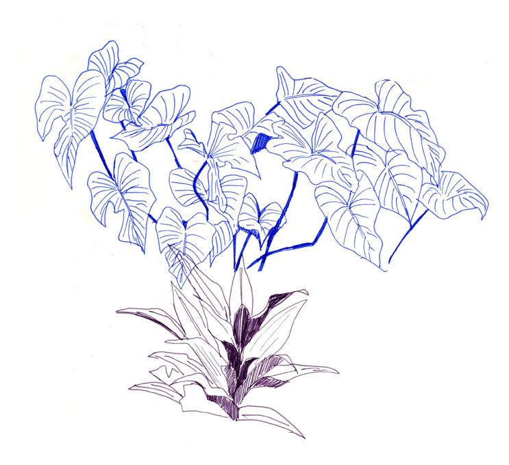 plants3web.jpg