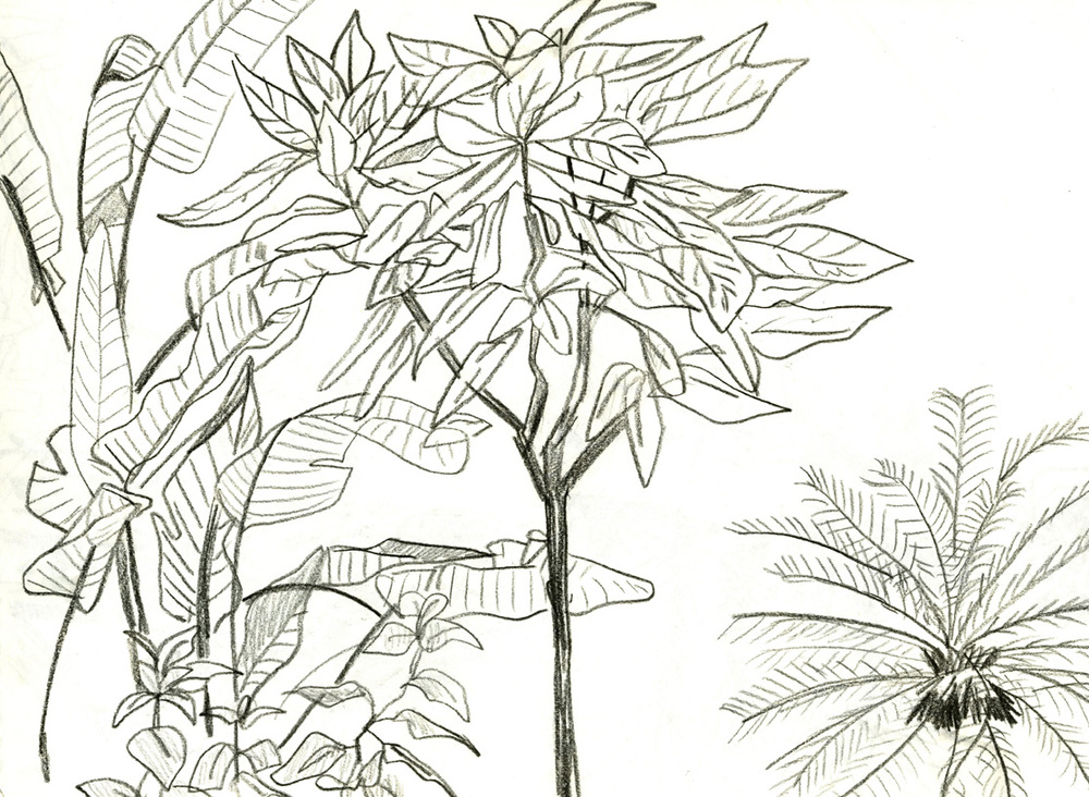 plantsweb.jpg