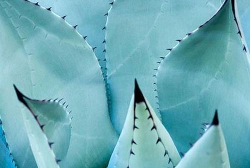 Bohemian Prints Blue Cactus.jpg