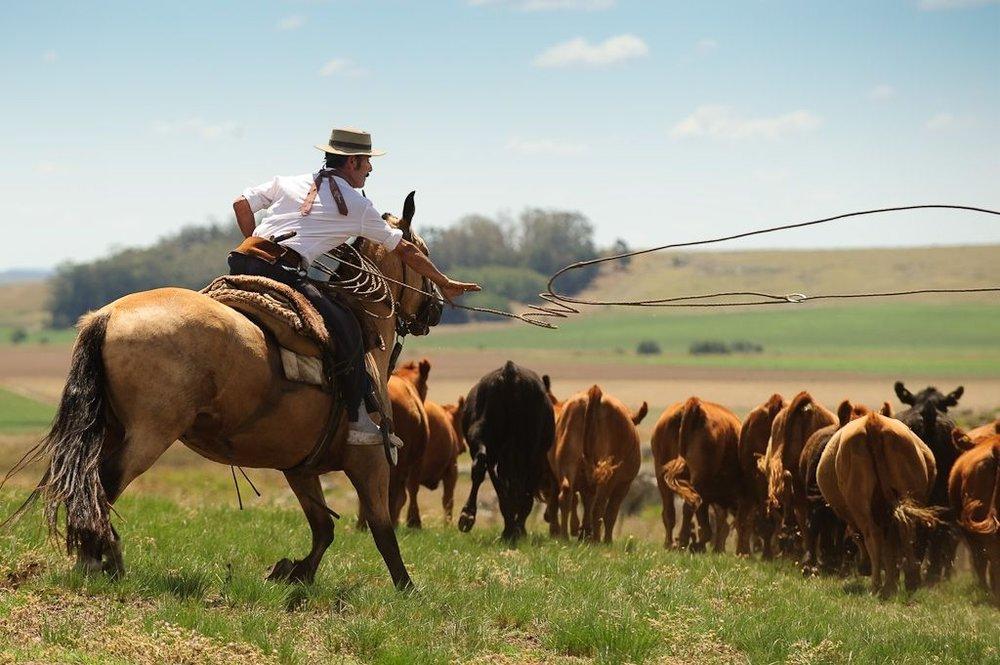 argentina-canada-beef.jpg