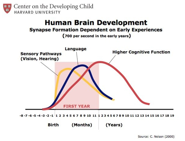 source: Dr. Charles Nelson's famous brain development research with center on the developing child & Harvard University